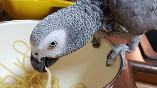 Rocco will Obst! Papagei kauft mit Hilfe von Alexa bei